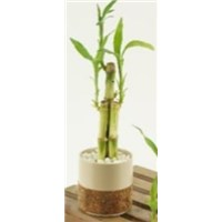 3_inch_Bamboo_Cork_Pot