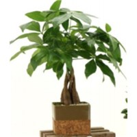 4.5_inch_cork_pot_bonsai_assorted_round___square