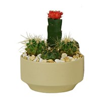 6_inch_Quebec_Cactus_Garden_Assorted_Pot